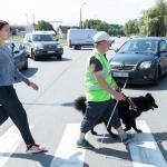 Neredzīgi gājēji uz ceļa un droša braukšana — padomi autovadītājiem un riteņbraucējiem